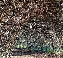 Giant Willow Maze At Abbotsbury Swannery, Dorset by lynn carter