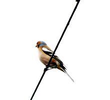 bird by Ms-Bexy