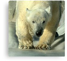 Running bear Canvas Print