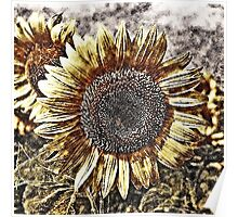 Vintage Sunflower artwork #1 Poster