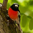 """Scarlet Robin"" by Heather Thorning"