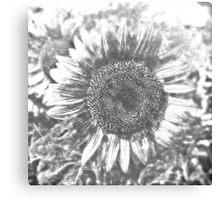 Vintage Sunflower artwork #3 Canvas Print