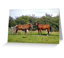 Horses Galore Greeting Card