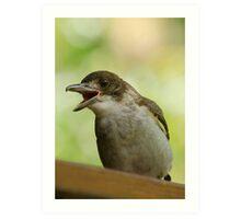 Juvenile Butcherbird Art Print