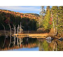 Autumn light dances over Zealand Pond, White Mountain National Forest, New Hampshire Photographic Print