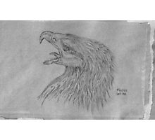 Black Eagle in South Africa Photographic Print
