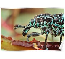 diamond weevil Poster