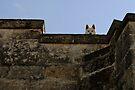 Watching, The Sassi Quarter, Matera, Basilicata, Italy by Andrew Jones
