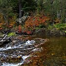 Beaver Dam by Charles & Patricia   Harkins ~ Picture Oregon