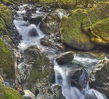 Torrent Walk, near Dolgellau, Wales by Bob Culshaw