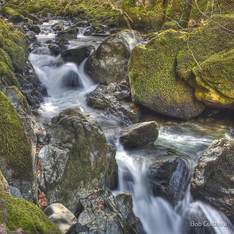 Torrent Walk, near Dolgellau, Wales by Bob Culshaw
