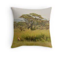 Prowling wild  lion, Serengeti national park, Tanzania Throw Pillow