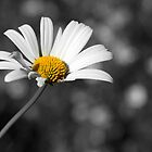 Oopsy daisy by Emma  Kelly