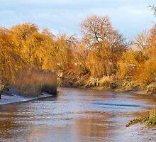 Willow Bank by Geoff Carpenter