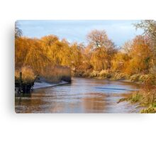 Willow Bank Canvas Print