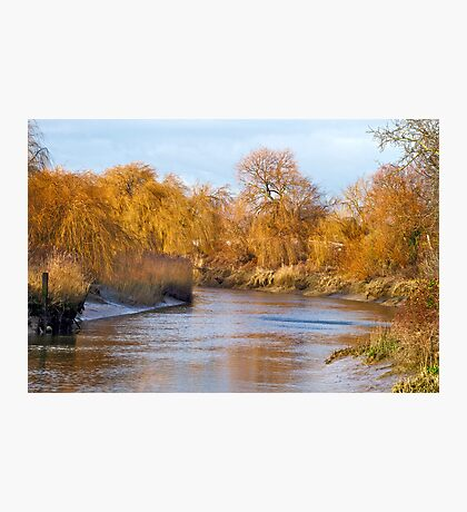 Willow Bank Photographic Print