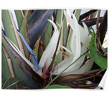 Tropical Blossom In The Winter - Flor Tropical En El Invierno Poster