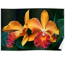 Orchid Passion Poster