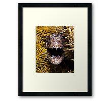 Moray Fangs Framed Print