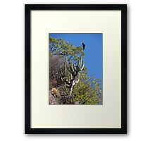 Cactus With Vulture - Cactus Con Buitre Framed Print