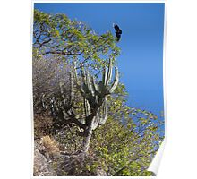 Cactus With Vulture - Cactus Con Buitre Poster