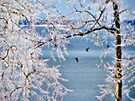 Icy Trees With Birds by Carolyn  Fletcher