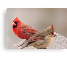 Female and Male Cardinal Canvas Print