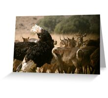 An ostrich shaking Greeting Card