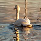 Swan song by Orla Flanagan