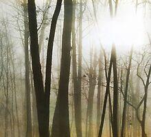 Morning Mist by Jennifer Rhoades