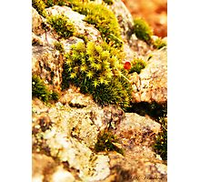 Moss & Rock Photographic Print