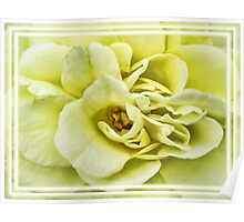 Dreamy Light Yellow Rose - Stamens & Petals Close-up ~ Framed Photography Poster