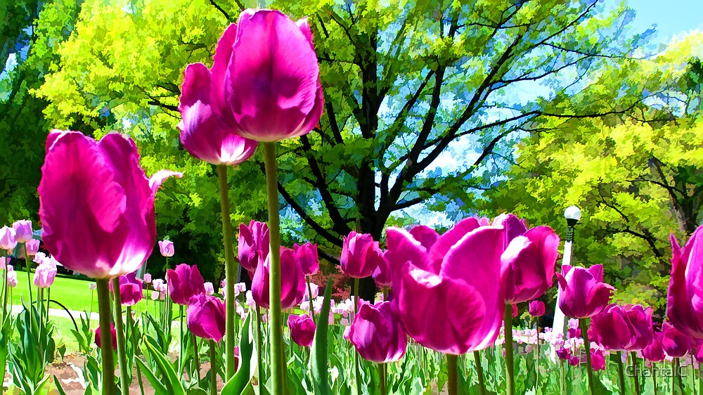 Luminous Magenta Tulips in a Flower Bed & Sunny Green Trees under Blue Skies by Chantal PhotoPix