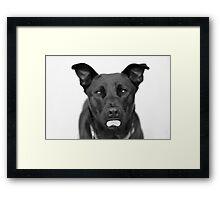 Black Pit Bull Framed Print