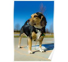 Sunny Day Beagle Poster