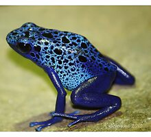 Blue poison arrow frog by bluetaipan