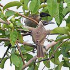 Birds by STHogan