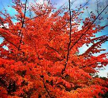 Autumn  by OceanBlack