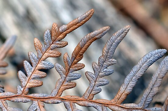 Silver and Rust in Nature by Glenda Williams