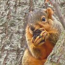 A Tough Nut To Crack by lorilee