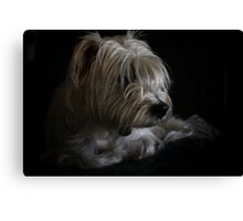 Rosco in natural light Canvas Print