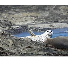 "Seal saying, ""hello"". Photographic Print"