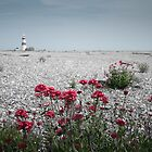 Orford Light House by Steve Taylor