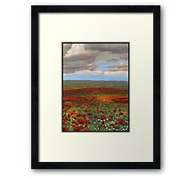 Mountain Poppies Framed Print