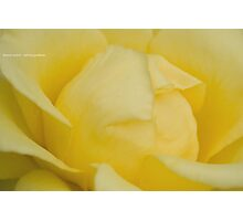 Lemon Sorbet Photographic Print
