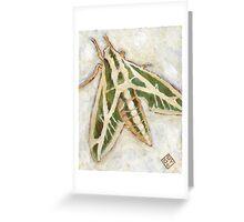 Hyles Lineata Greeting Card