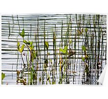 Golzernsee abstract lake and plantlife Poster