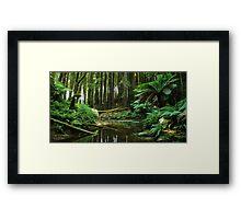 Shh.......Rainforest At Work Framed Print
