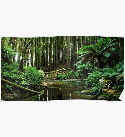 Shh.......Rainforest At Work Poster