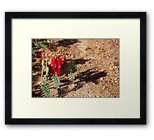 Sturt's Desert Framed Print